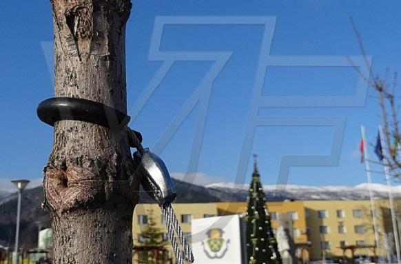 Дърветата в Община Челопеч – стабилизирани със земни анкери от ВИ ДЖИ ЕФ