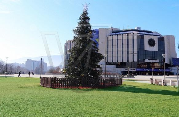 Коледната елха в София – стабилизирана със земни анкери от ВИ ДЖИ ЕФ